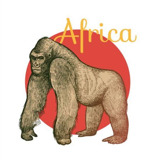 539x539 Africa Orangutan Vector Free Download