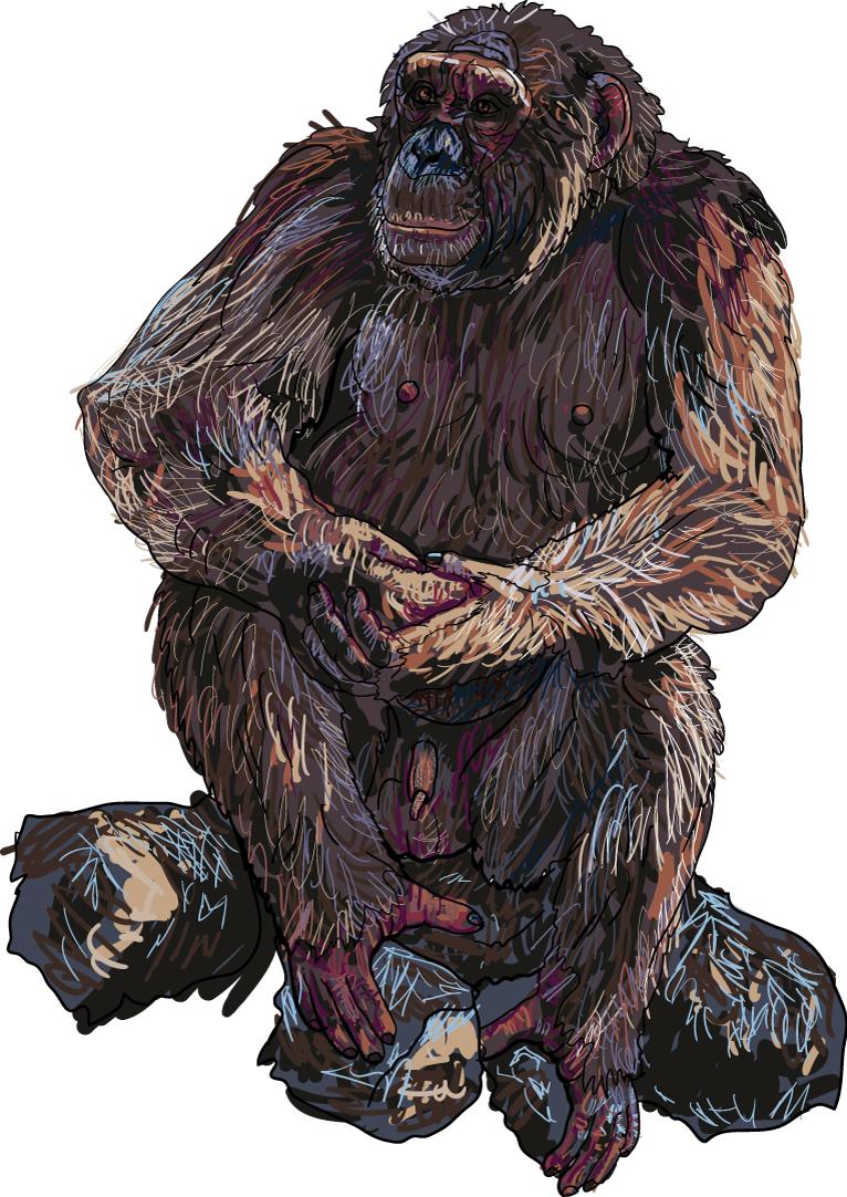 766x1082 Wild Orangutan Free Vector Graphic Download