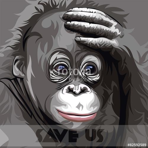 500x500 Orangutan Vector Stock Image And Royalty Free Vector Files On