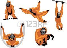 236x170 An Orangutan In Paris Monkeys Orangutan, Monkey