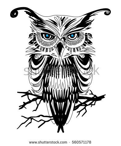 Owl Vector Images