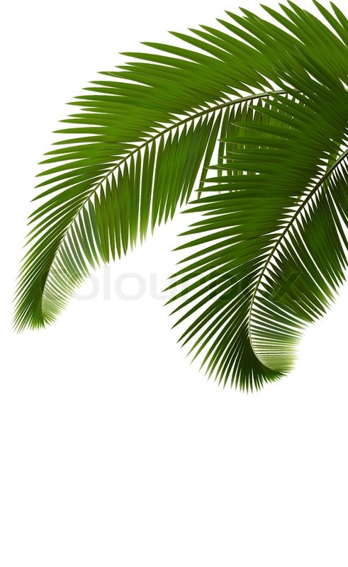 491x800 Palm Leaves On White Background Vector Stock Vector Colourbox