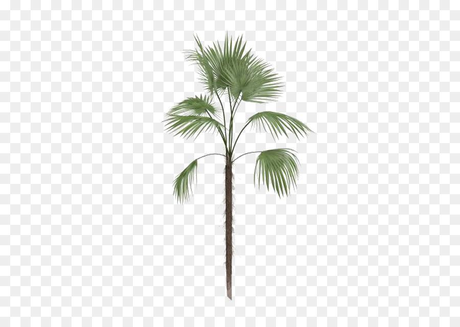 900x640 Arecaceae Tree Leaf Euclidean Vector