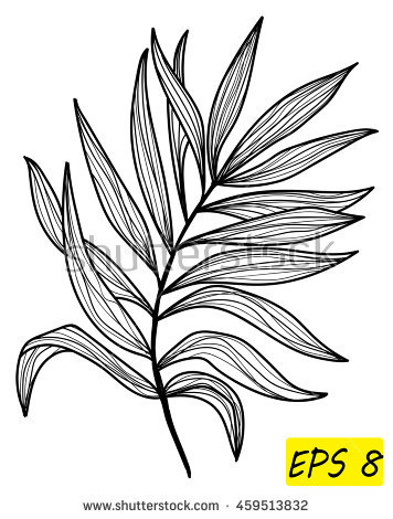 Palm Frond Vector