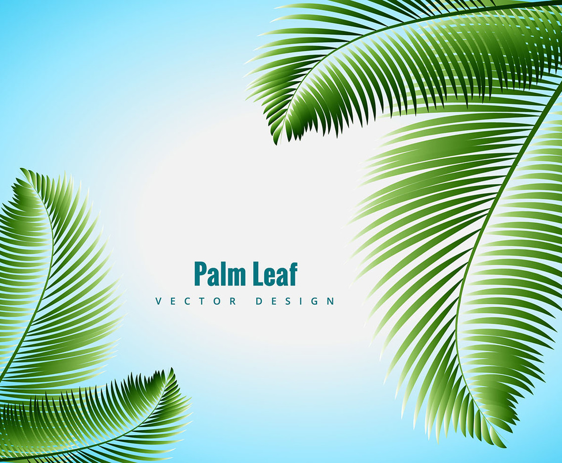 1136x936 Palm Leaf Vector Vector Art Amp Graphics