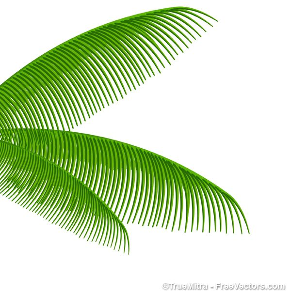 600x609 Palm Tree Leaves Free Vectors Free Palm Leaf Vector