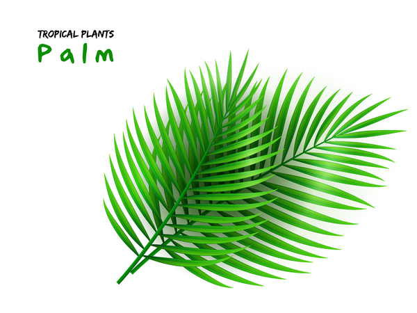 600x450 Palm Leaves Vector Illustration Free Download