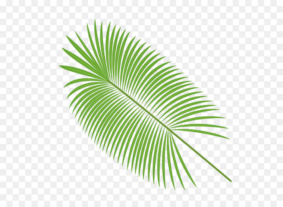 900x660 Palm Leaves Vector Material Png Download