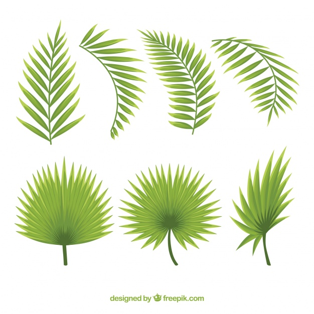 626x626 Set Of Beautiful Palm Leaves Vector Free Download
