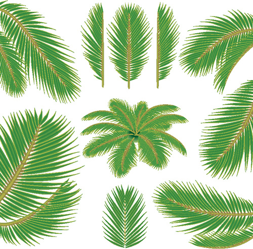 500x492 Set Of Green Palm Leaves Vector Free Vector In Adobe Illustrator