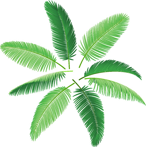 485x487 Set Of Green Palm Leaves Vector Free Vector In Encapsulated