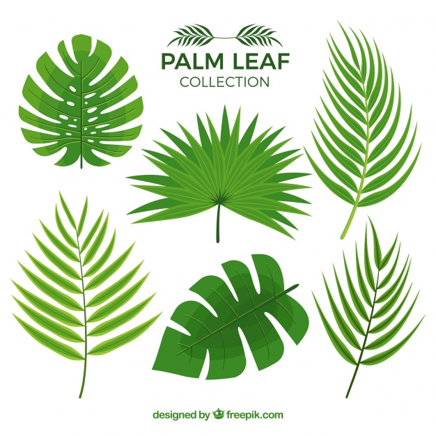 626x626 Several Palm Leaves Vector Free Download