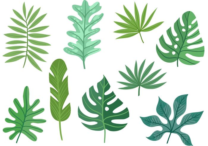 700x490 Vectors Of Leaves Free Vector Graphics Everypixel