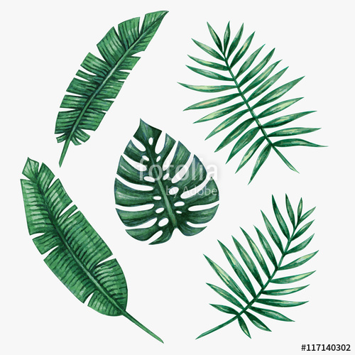 500x500 Watercolor Tropical Palm Leaves. Vector Illustration. Stock