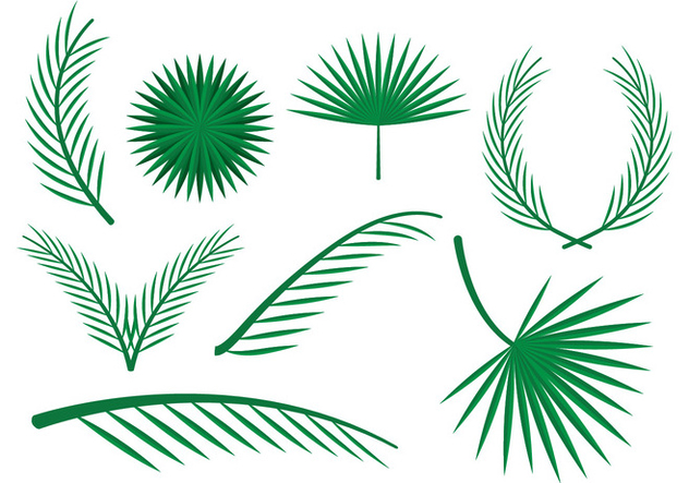 632x443 Free Palm Leaves Vector Ornaments Free Vector Download 385263