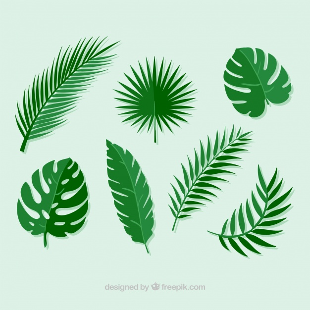 626x626 Pack Of Palm Leaves Vector Free Download