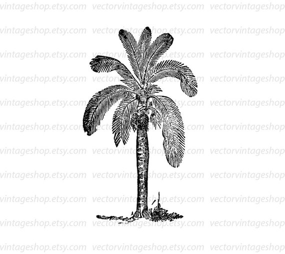 570x509 Palm Tree Clipart Vector Tropical Theme Wax Palm Graphic Clip Etsy