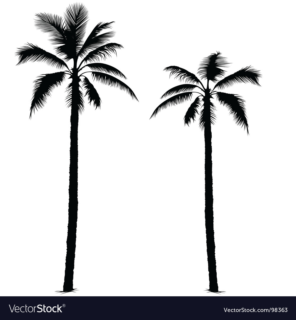 1000x1080 Images Palm Tree
