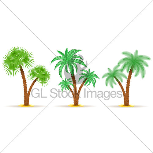 500x500 Palm Tree Vector Illustration Gl Stock Images