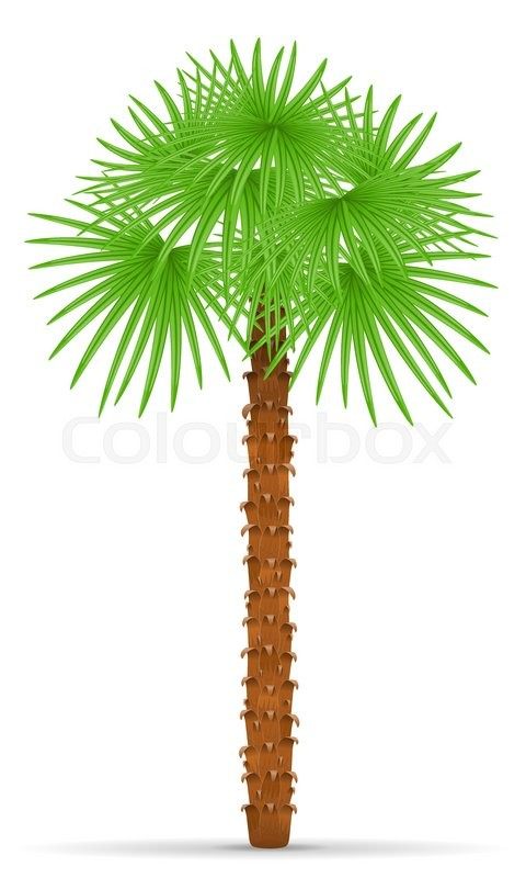 480x800 Palm Tree Vector Illustration Isolated On White Background Stock