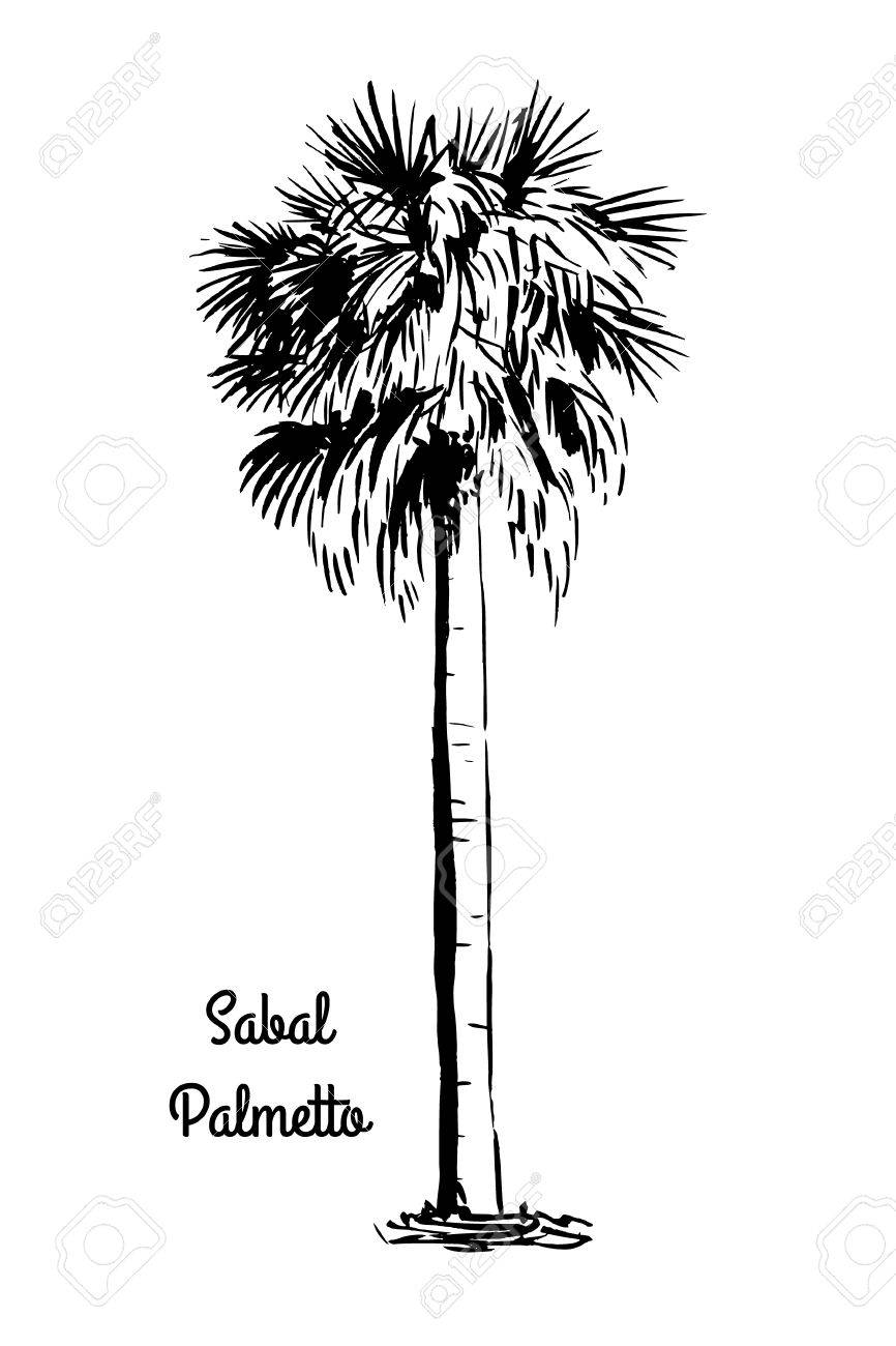 866x1300 Palmetto Tree Pictures Desktop Backgrounds