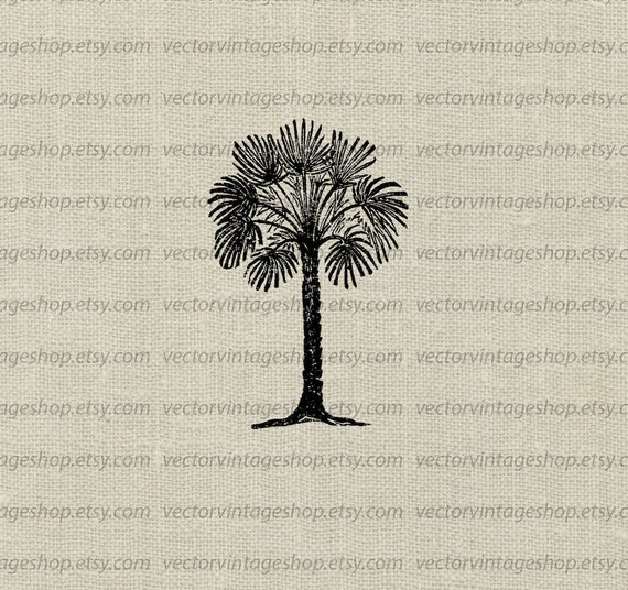 570x536 Palmetto Tree Vector Instant Download Clip Art Tropical Palm Etsy