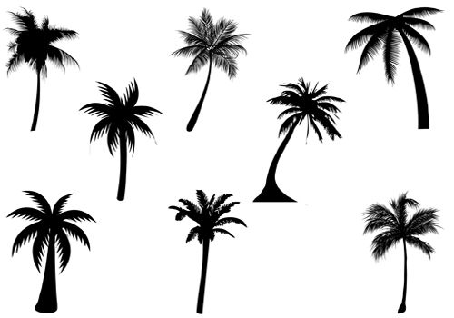 500x350 Collection Of Little Palm Tree Drawing High Quality, Free