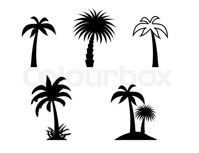 800x615 Silhouette Of Palm Trees. Vector Illustration. Eps10 Stock