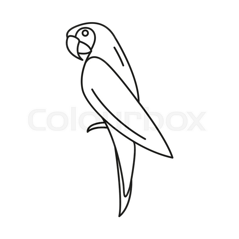 800x800 Pirate Parrot Icon. Outline Pirate Parrot Vector Icon For Web