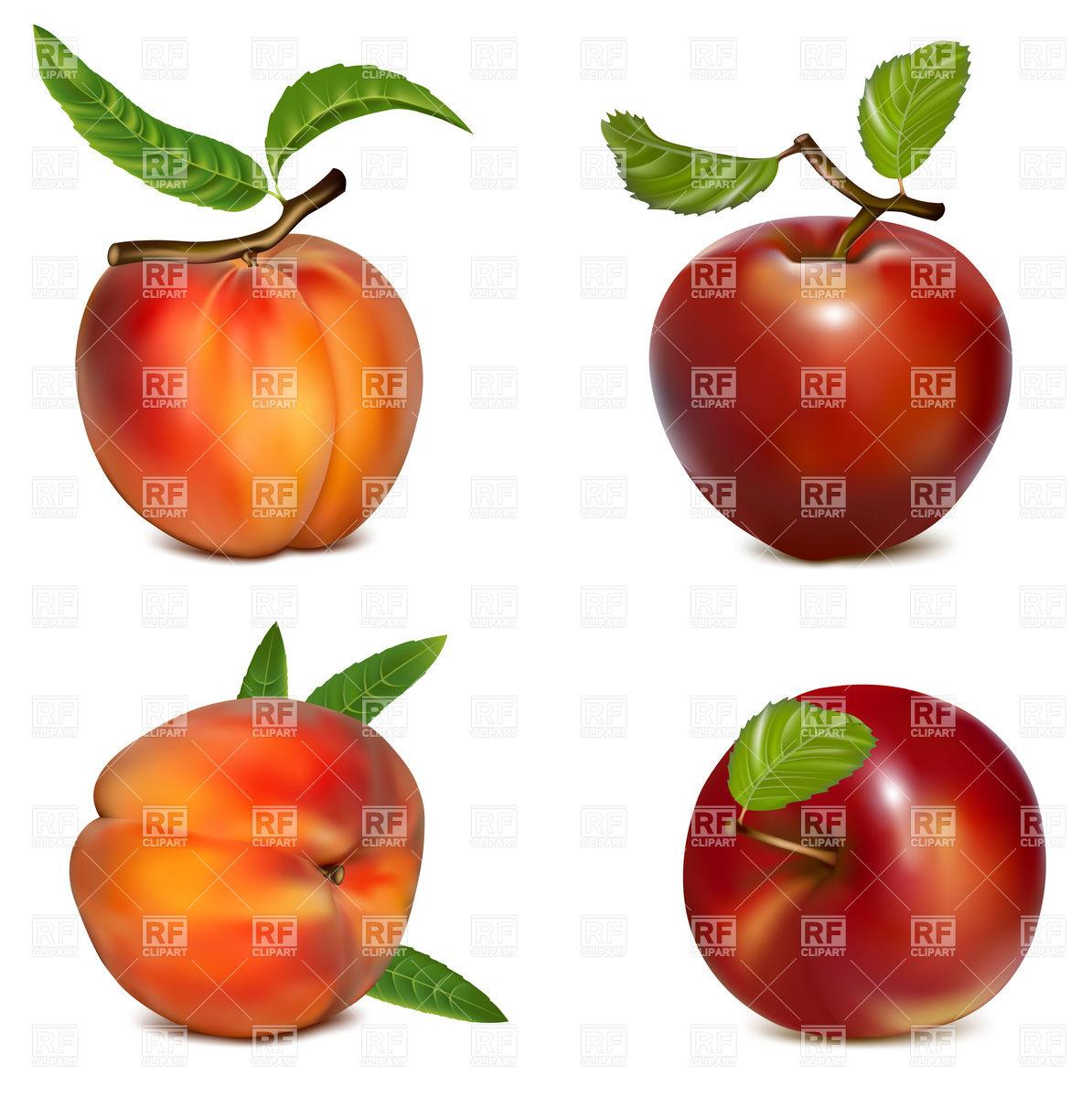 Peach Vector Free