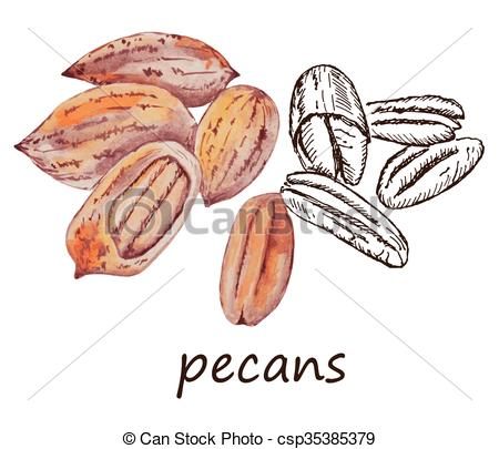 450x405 Nut Pecans. Hand Drawing Set Of Vector Sketches.