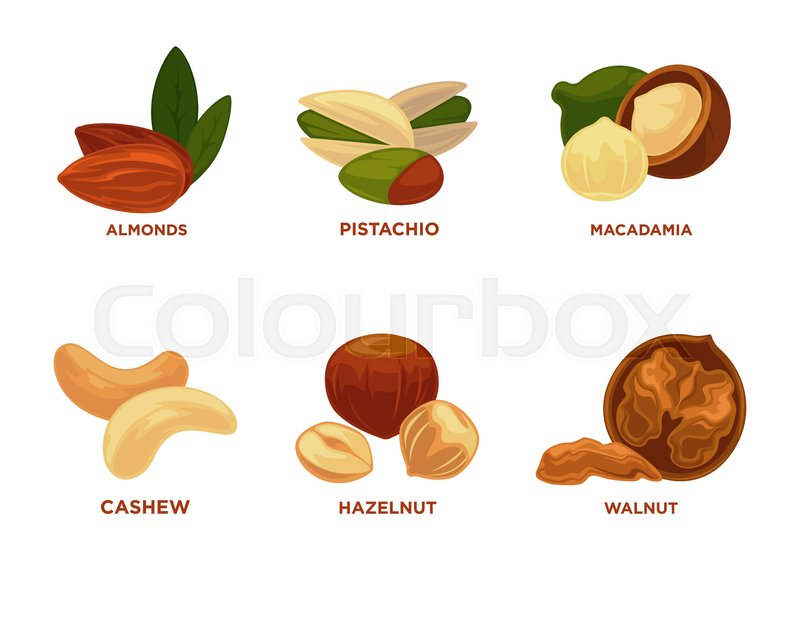 800x639 Nut Set. Ripe Nuts And Seeds Vector Illustration. Various Nuts