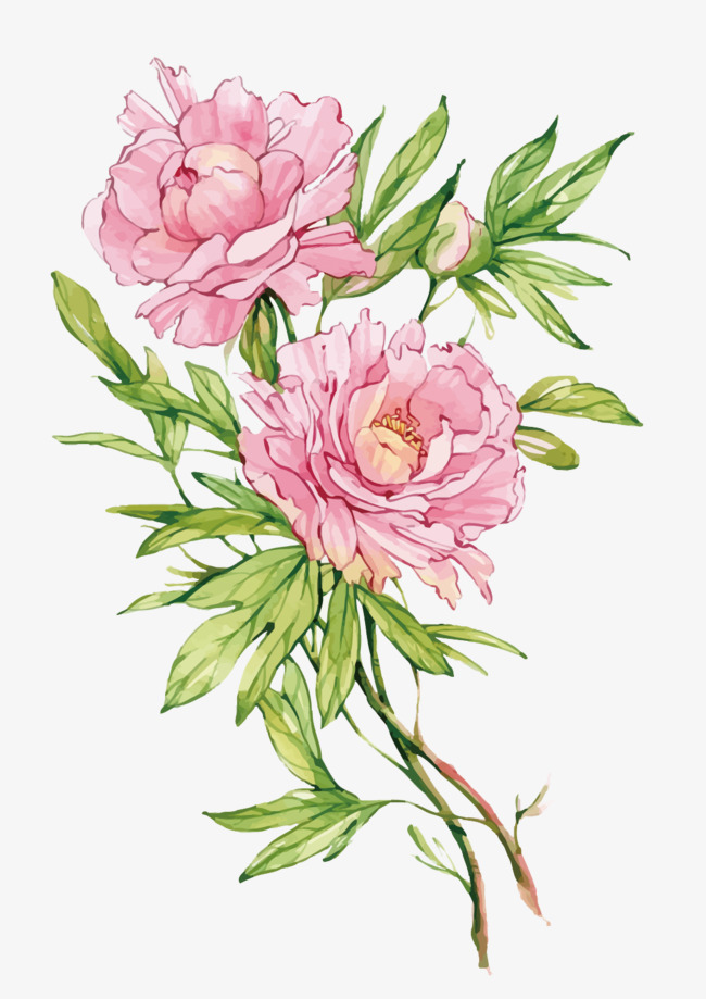 650x919 Vector Pink Peony Flower, Flower Vector, Peony, Flowers Png And