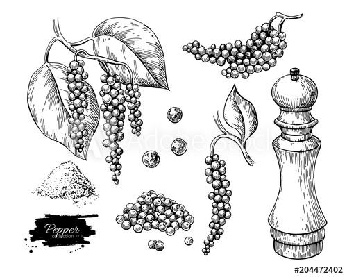 500x399 Black Pepper Vector Drawing Set. Peppercorn Heap, Mill, Dryed Seed