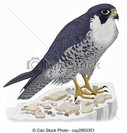 449x470 Peregrine Falcon