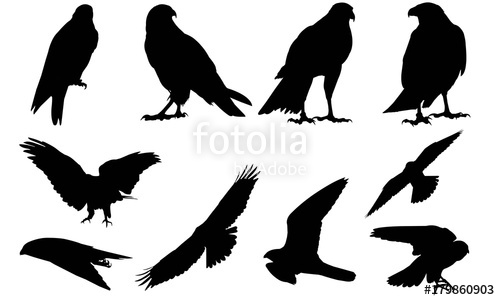 500x300 Peregrine Falcon Silhouette Vector Graphics Stock Image And