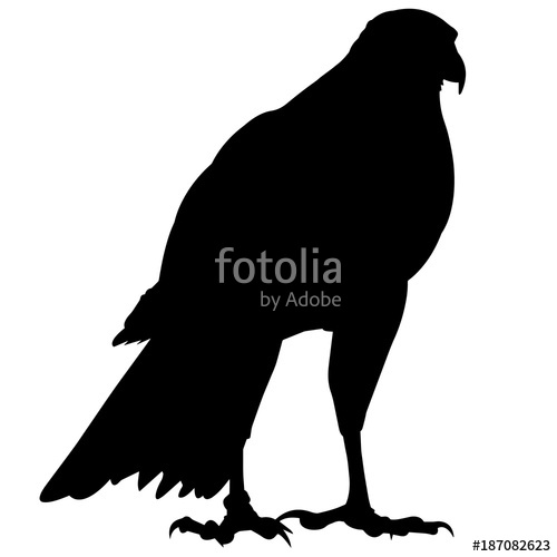 500x500 Peregrine Falcon Silhouette Vector Graphics Stock Image And