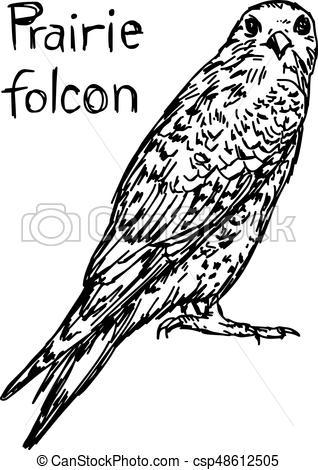 318x470 Prairie Falcon Clipart Vector