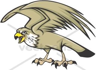 320x232 Serious Peregrine Falcon