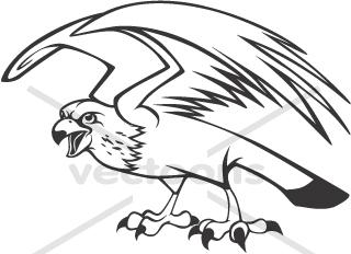 320x232 Wild Peregrine Falcon In Black