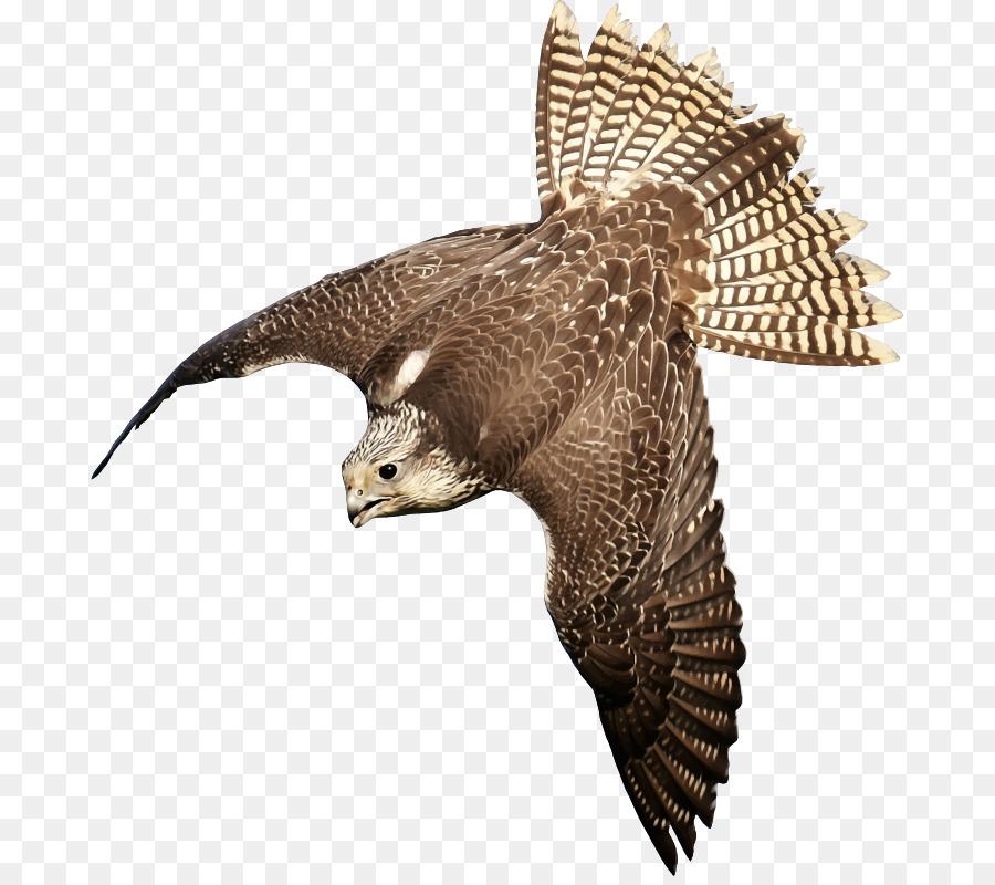 900x800 Bird Peregrine Falcon Saker Falcon Clip Art