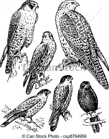 371x470 Bird Falcon. Some Birds Falcon Sitting On The Branches Isolated On