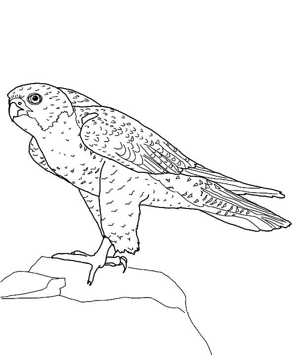600x717 Falcon Clipart Vector Illustration Of A Bald Eagle Soccer Player