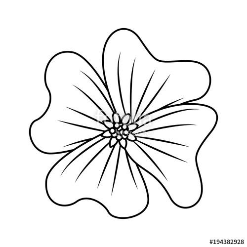 500x500 Flower Periwinkle Delicate Decoration Floral Nature Petals Vector