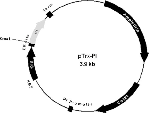 477x362 Map Of The Vector Constructed For Expressing Trx Pi In E. Coli