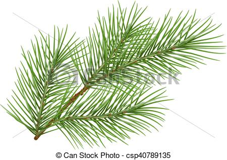 450x317 Green Fluffy Pine Branch Symbol Of New Year. Isolated On White
