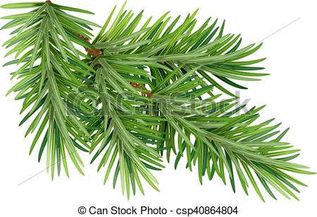 450x308 Green Fluffy Pine Branch. Isolated On White Background