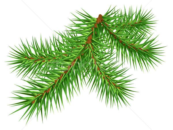 600x452 Green Pine Branch On White Background Vector Illustration Alexey
