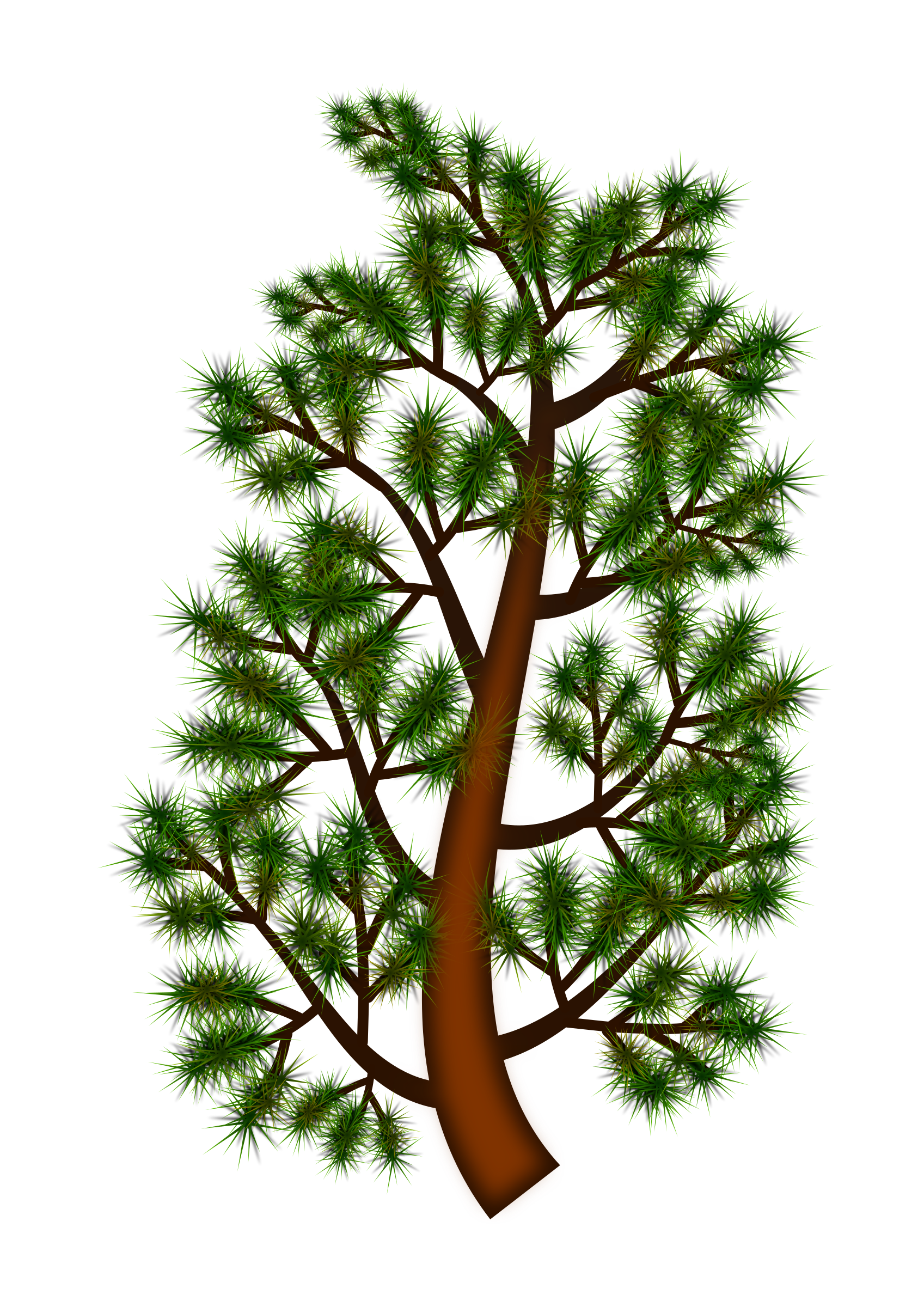1697x2400 Pine Branch Vector Clipart Image