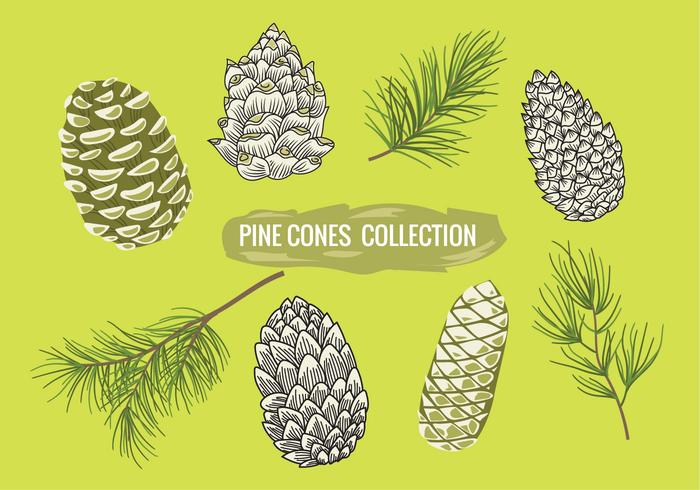 700x490 Pine Branch With Pine Cones Set Collection